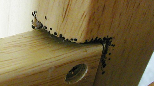 bbug_spots_futon_Lancasterunl1
