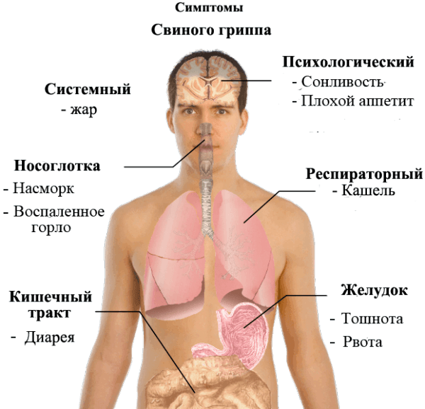 symptoms_of_swine_flu_ru-e1452721980579