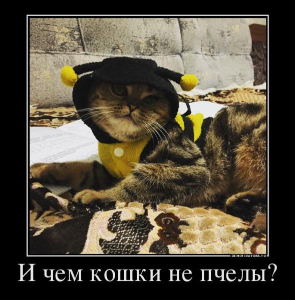 кошка тесса