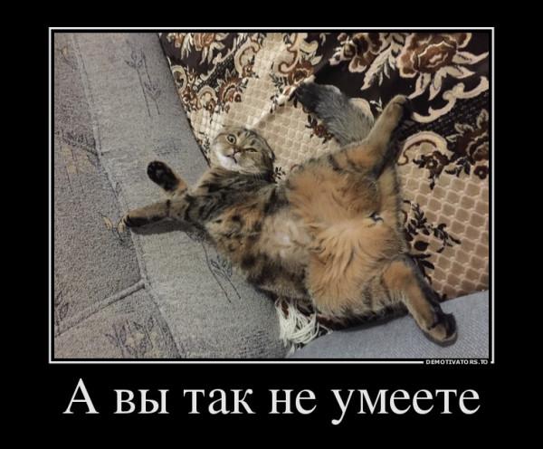 кошка тесса2