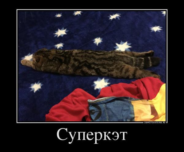 кошка тесса3