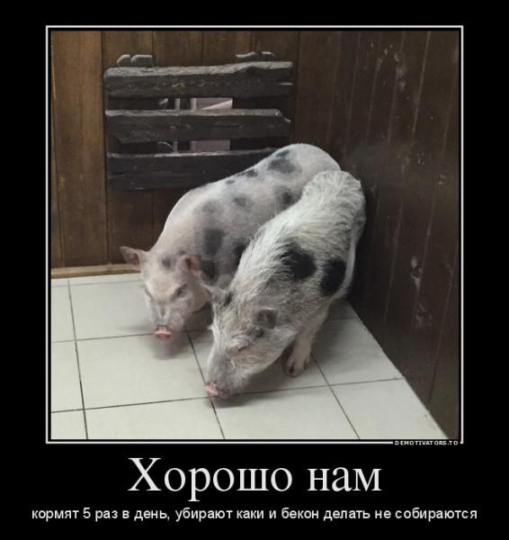 свинки
