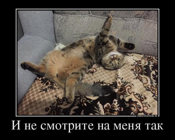 кошка тесса4