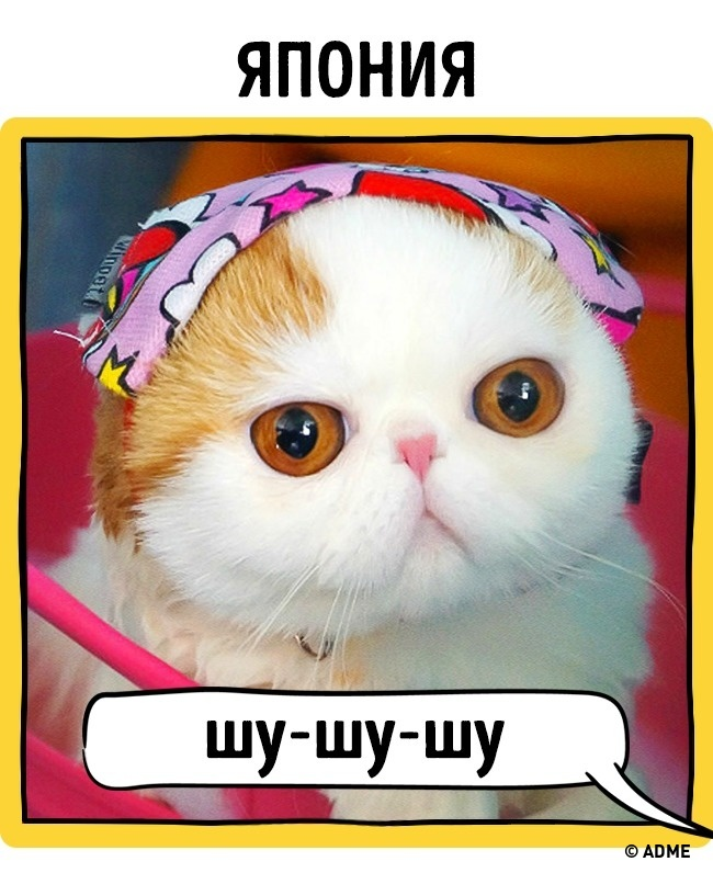 Звуки котов когда зовут кошек