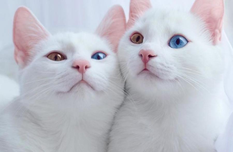 cats-main1