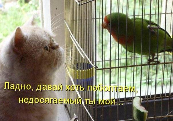 qy1_3OiVK1o