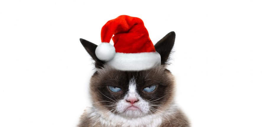 636169317974306091166057486_Grumpy-Christmas-Cat-copy