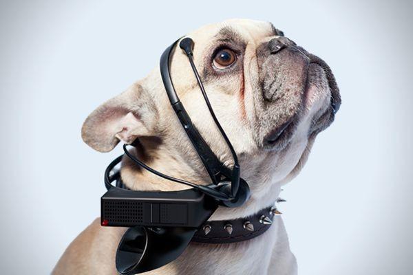 No-More-Woof-Dog-Speech-Translator-1