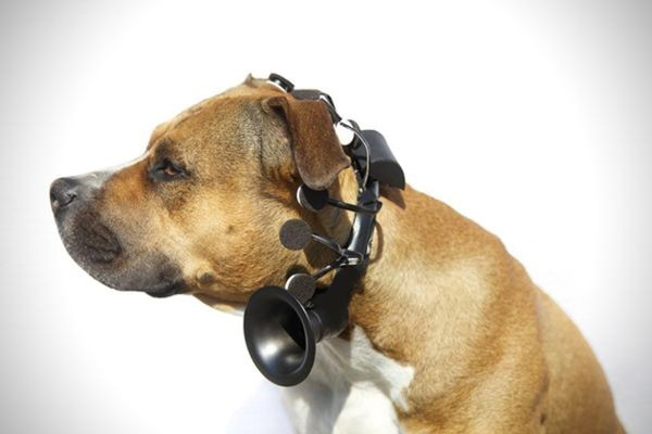 No-More-Woof-Dog-Speech-Translator-2