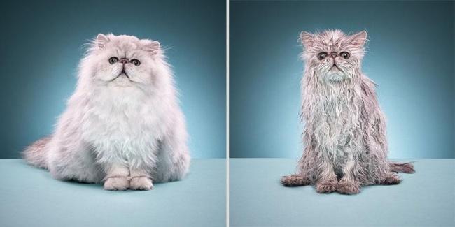 3497655-R3L8T8D-650-funny-wet-cats-7