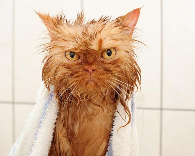 3496955-R3L8T8D-650-funny-wet-cats-4