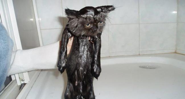 3497205-R3L8T8D-650-funny-wet-cats-25