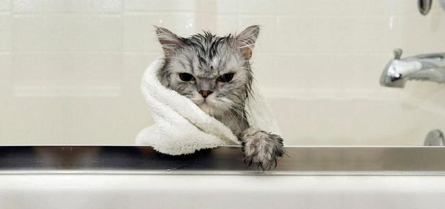 3497255-R3L8T8D-650-funny-wet-cats-37