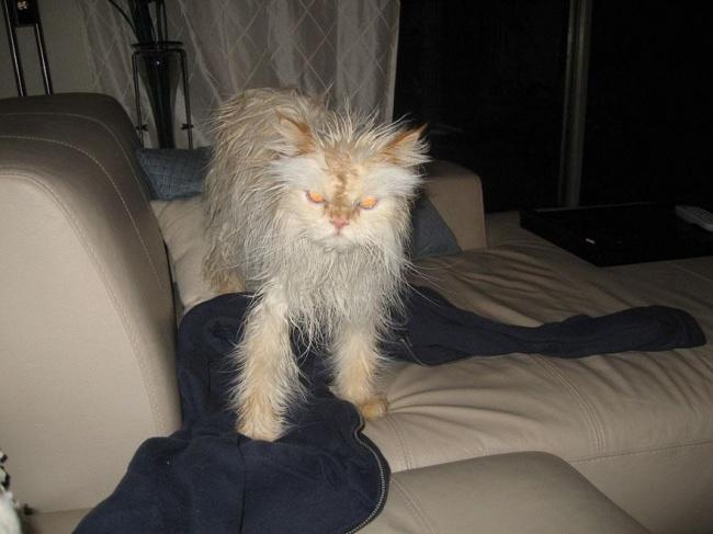 3497355-R3L8T8D-650-funny-wet-cats-10