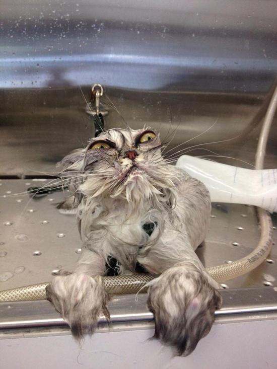 3497705-R3L8T8D-550-funny-wet-cats-8