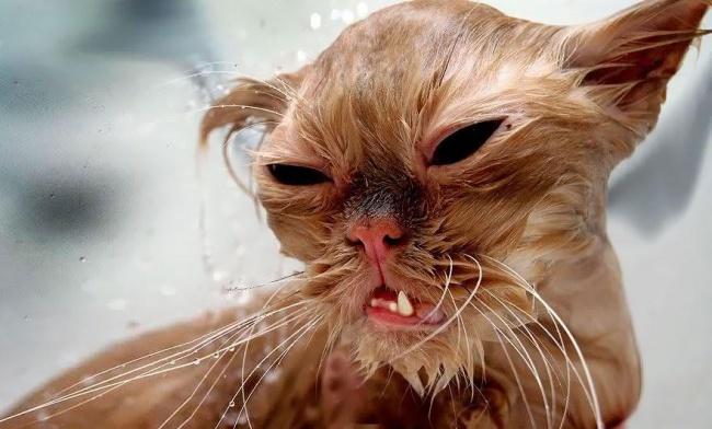 3497755-R3L8T8D-650-funny-wet-cats-24