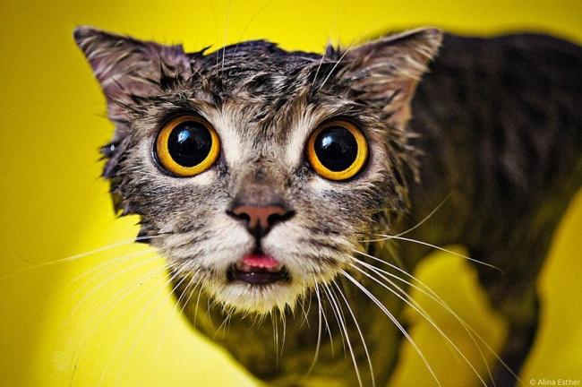 3497855-R3L8T8D-650-funny-wet-cats-3