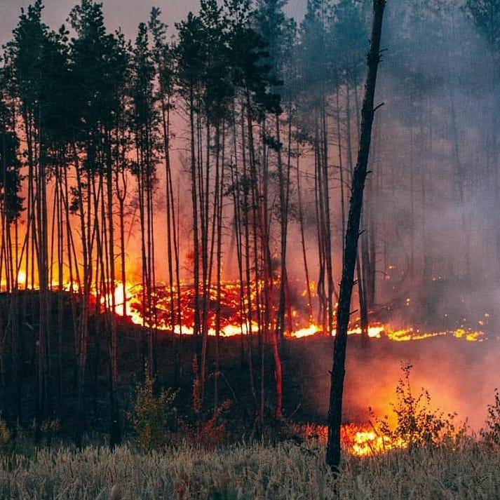 Поджег леса в Воронеже
