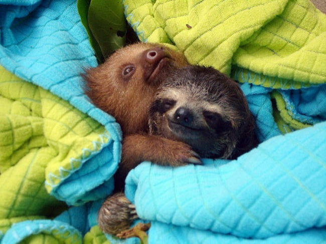 4229205-R3L8T8D-650-loving-animals-using-each-other-as-pillows-my-heart-has-melted-completely-3