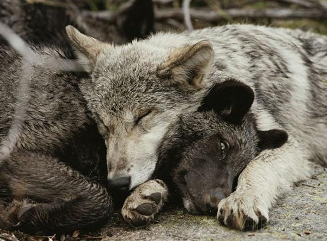 4224405-R3L8T8D-650-cute_animals_sleeping_pillows_30