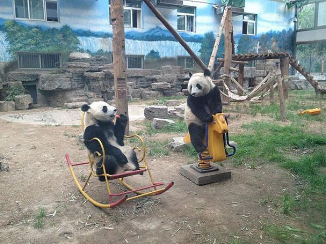 4436555-R3L8T8D-650-funny-bears-doing-human-things-31