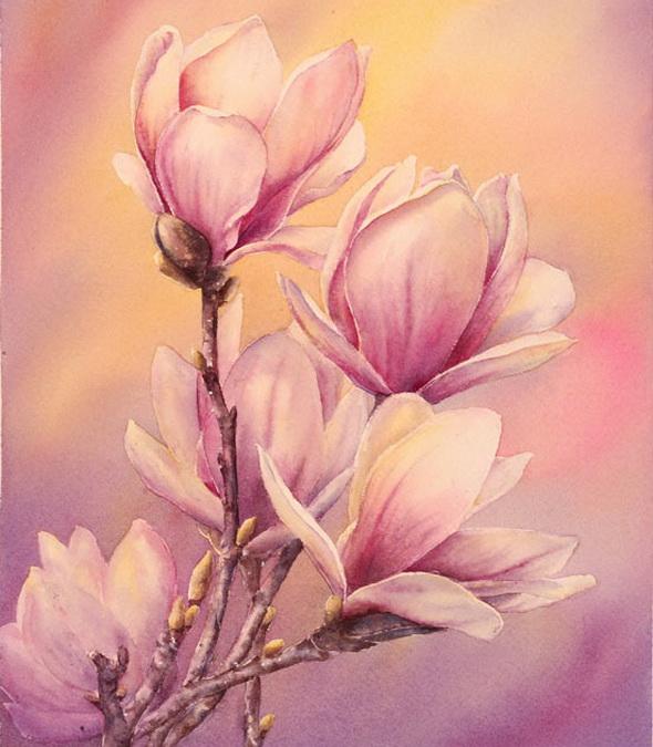 63241081_Magnolias