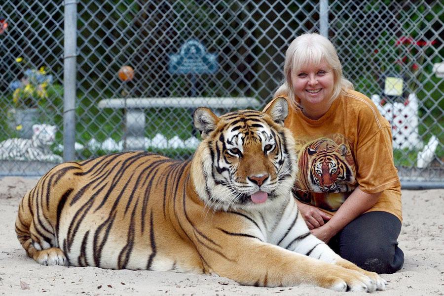 tigri-7