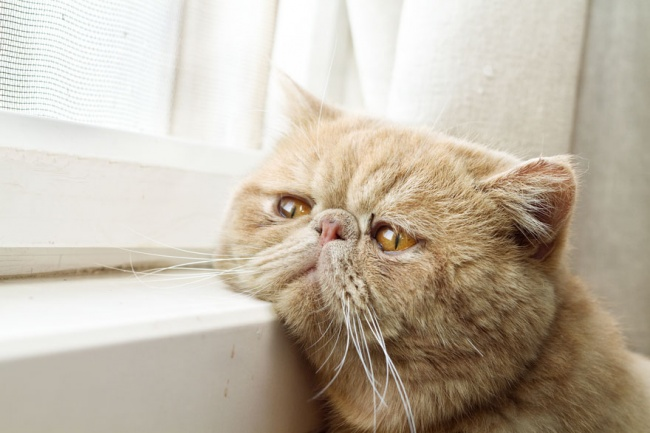 7236460-R3L8T8D-650-cat-waiting-window-60