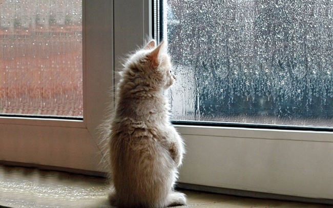 7238110-R3L8T8D-650-cat-waiting-window-69