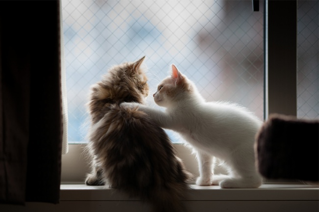 7238360-R3L8T8D-650-cat-waiting-window-68