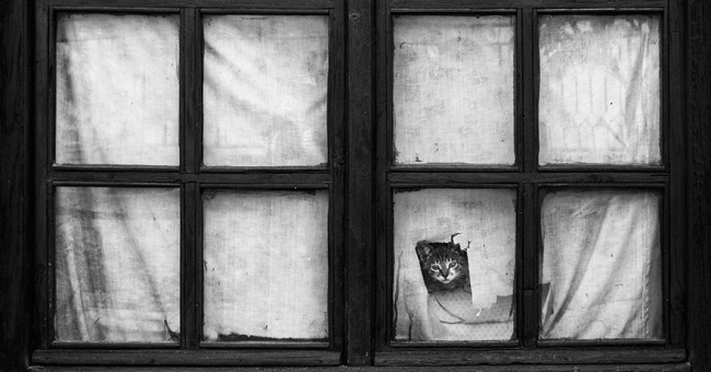 7238560-R3L8T8D-650-cat-waiting-window-32