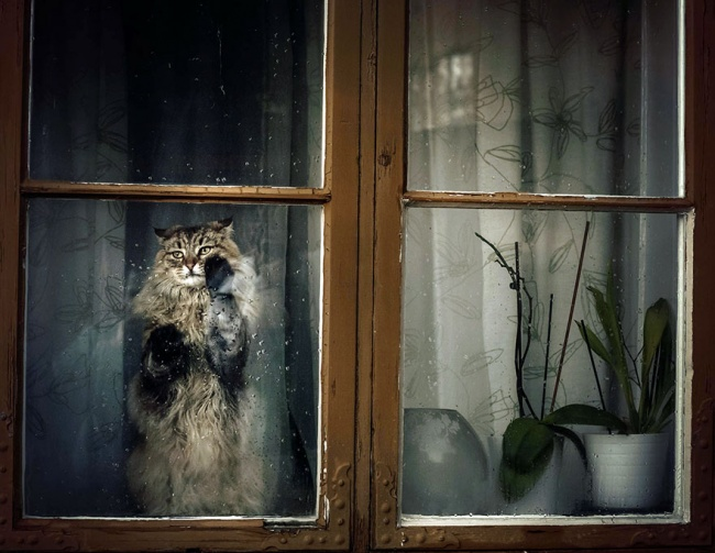 7238660-R3L8T8D-650-cat-waiting-window-7