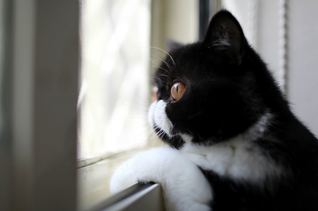 7238860-R3L8T8D-650-cat-waiting-window-61