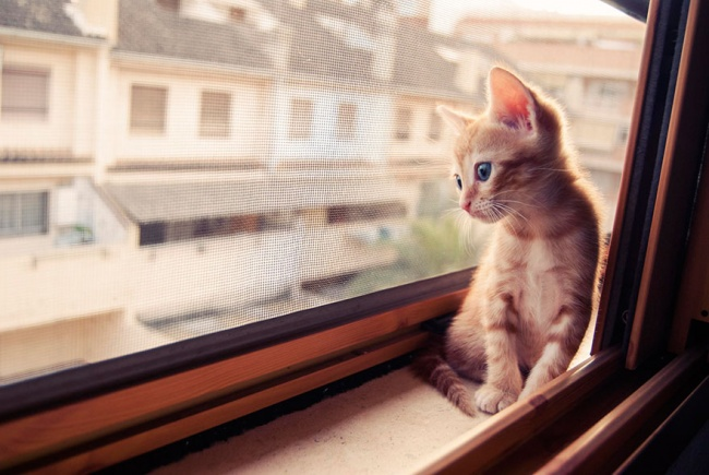 7239560-R3L8T8D-650-cat-waiting-window-6