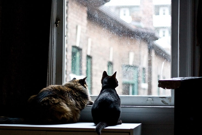 7239660-R3L8T8D-650-cat-waiting-window-30