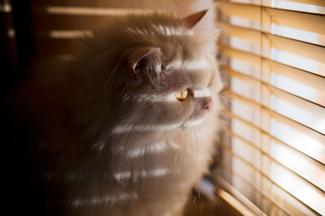 7240060-R3L8T8D-650-cat-waiting-window-12