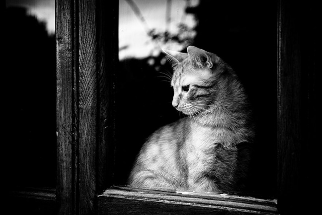 7240560-R3L8T8D-650-cat-waiting-window-44
