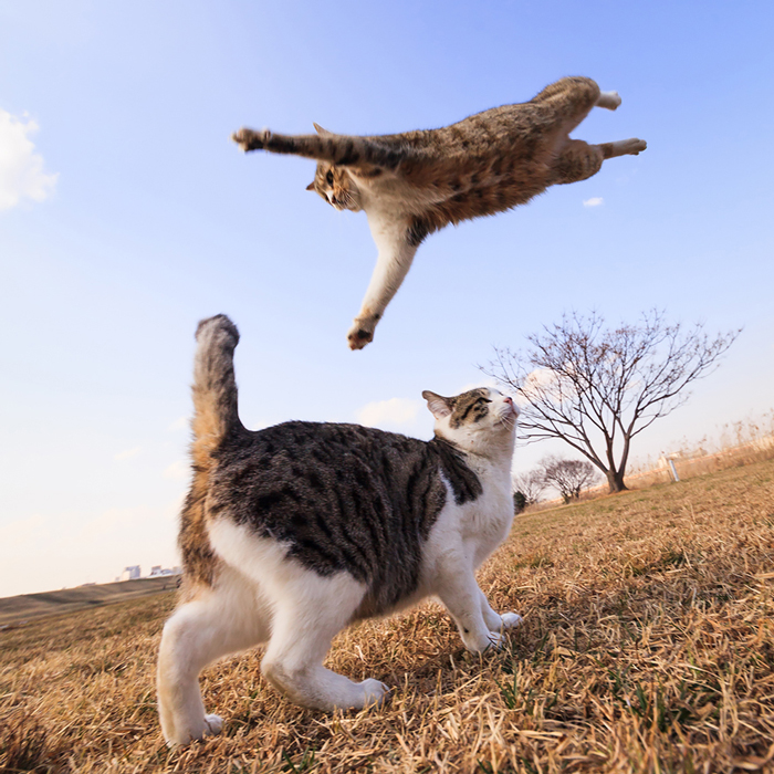 Jumping-Cats-4