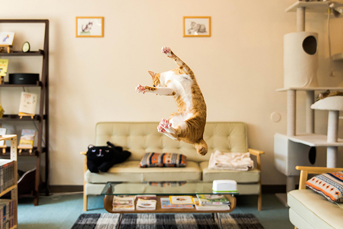 Jumping-Cats-2