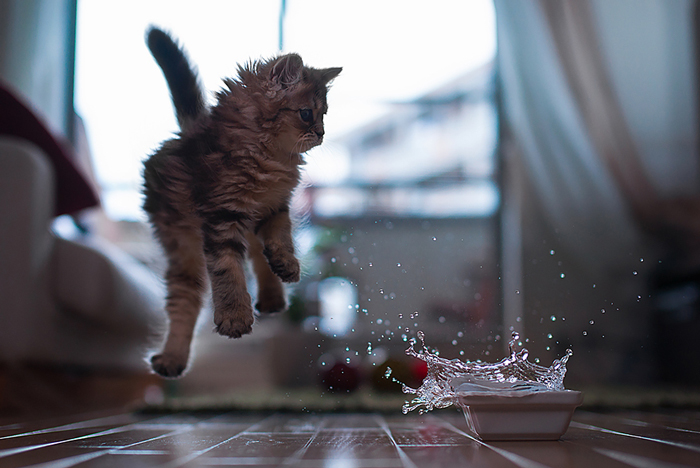 Jumping-Cats-3