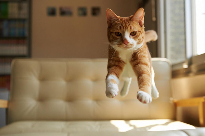 Jumping-Cats-6