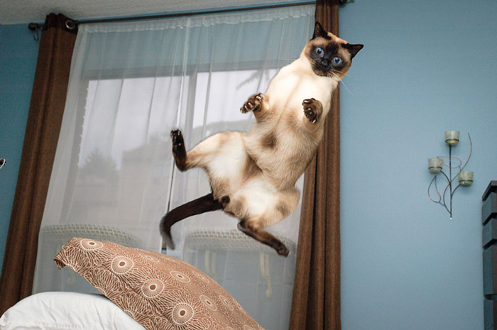 Jumping-Cats-8