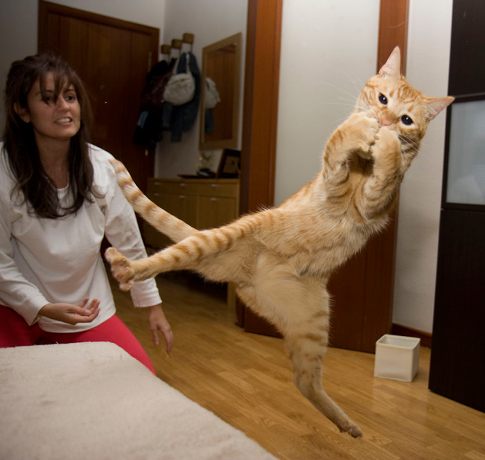 Jumping-Cats-10