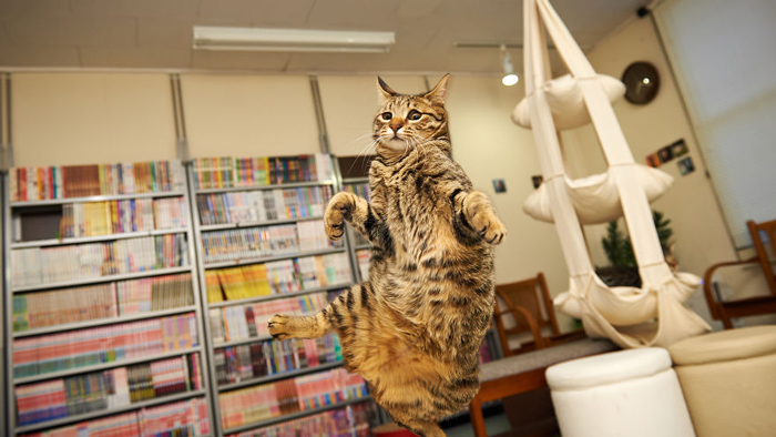 Jumping-Cats-11
