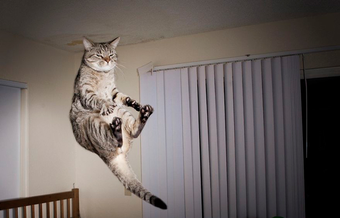 Jumping-Cats-12