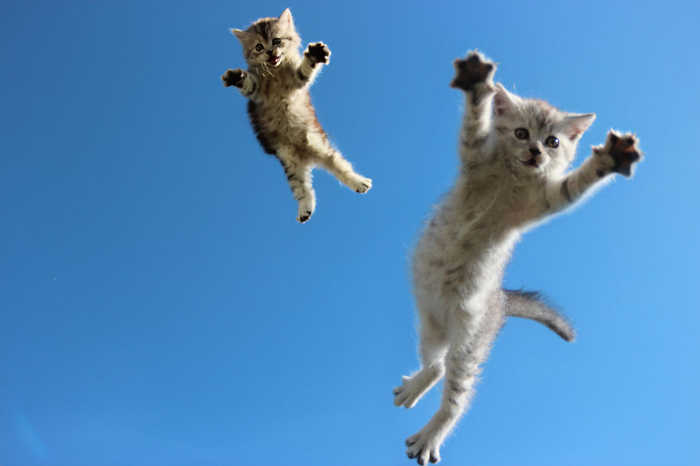 Jumping-Cats-13
