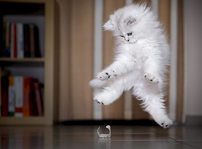 Jumping-Cats-14