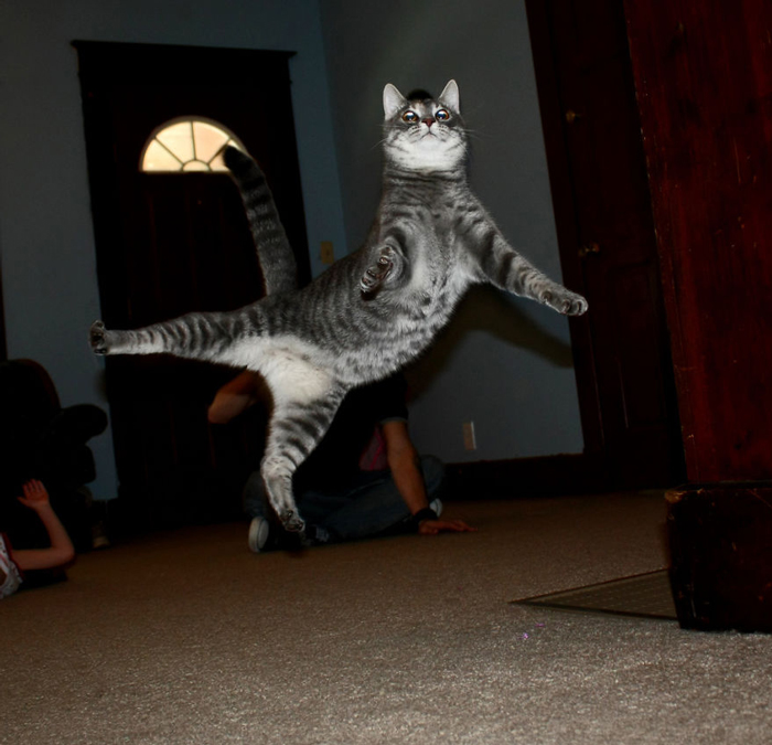 Jumping-Cats-15
