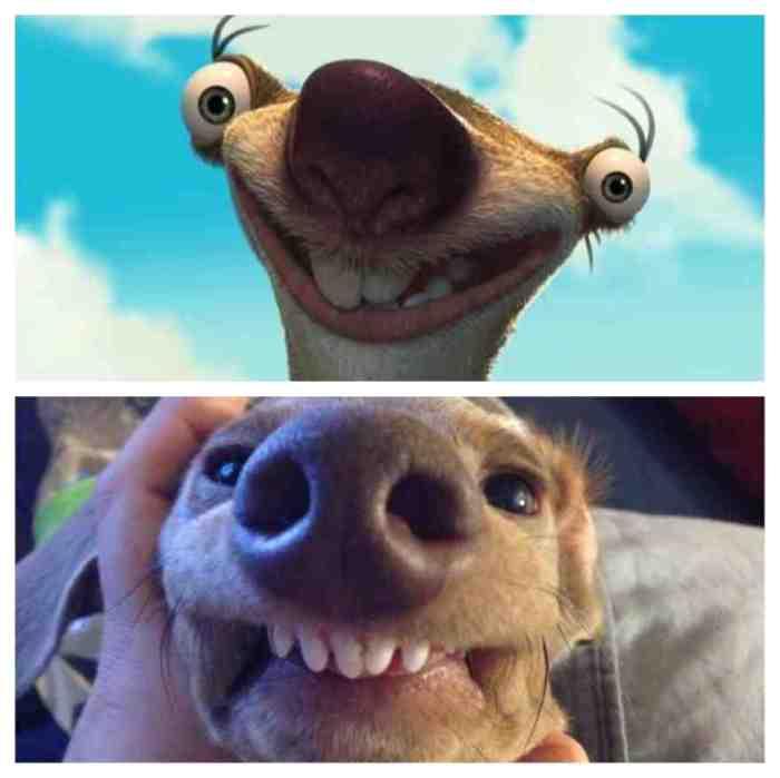 Dogs-Lookalike-you-wont-Believe-20