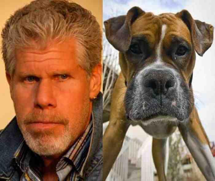 Dogs-Lookalike-you-wont-Believe-17